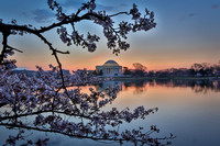 "vicarious-photography ""Aaron Jackson"" Virginia landscapes time-lapse fashion event awards ""red carpet"" publicity portraits 2013 ""Cherry Blossom"" Jefferson Memorial Tidal Bason Washington DC Festival"
